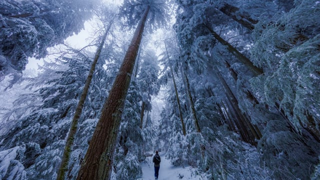 Walking in a Snow Forest. Part 2