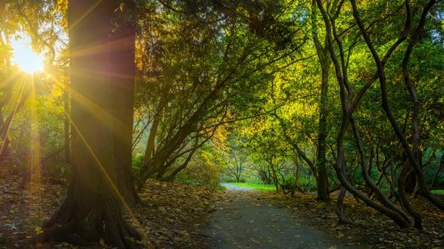 Fall Foliage in Arboretum-3