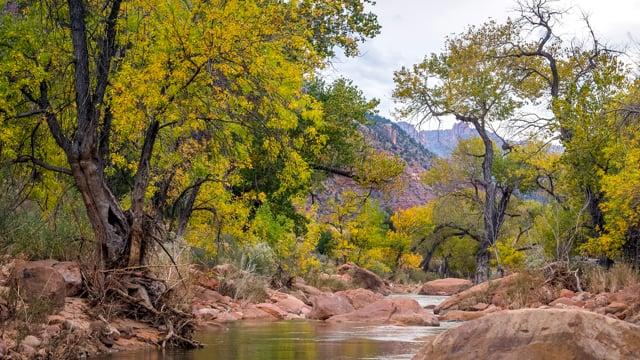 Virgin River, Zion NP