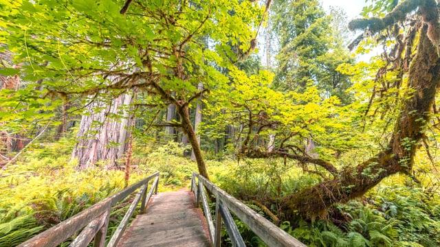 Redwoods: Among the Giants