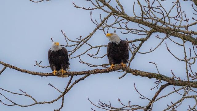 American Wild Animals, Yakima Canyon Road, WA