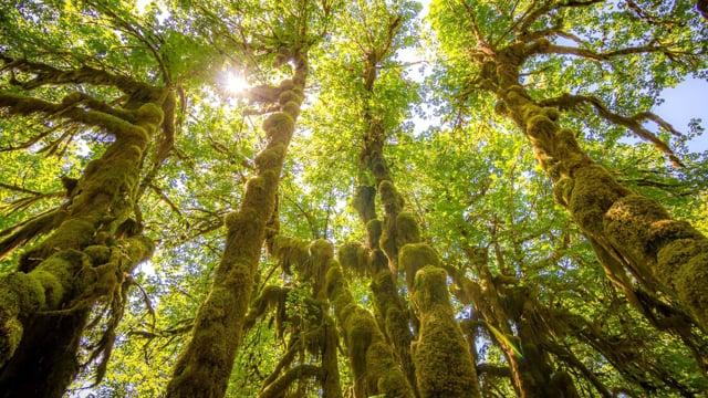 Hoh Rain Forest. Summer