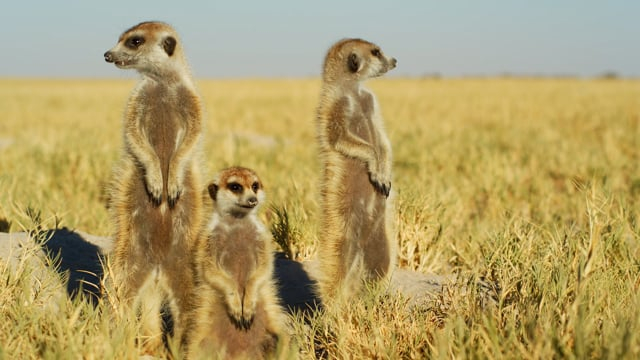 African Wildlife & Cute Meerkats and Squirrels