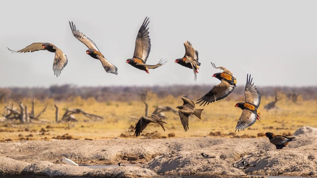 Virtual Trip to Kruger National Park in South Africa