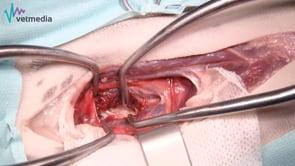 SLOT ventral o corpectomía ventral