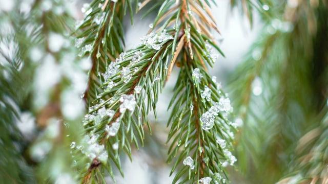 Winter Forest Wonderland