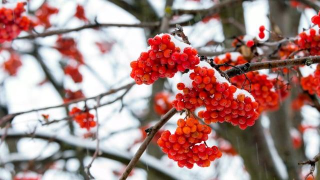 Arboretum Oleksandriya in Winter, Ukraine in 4K