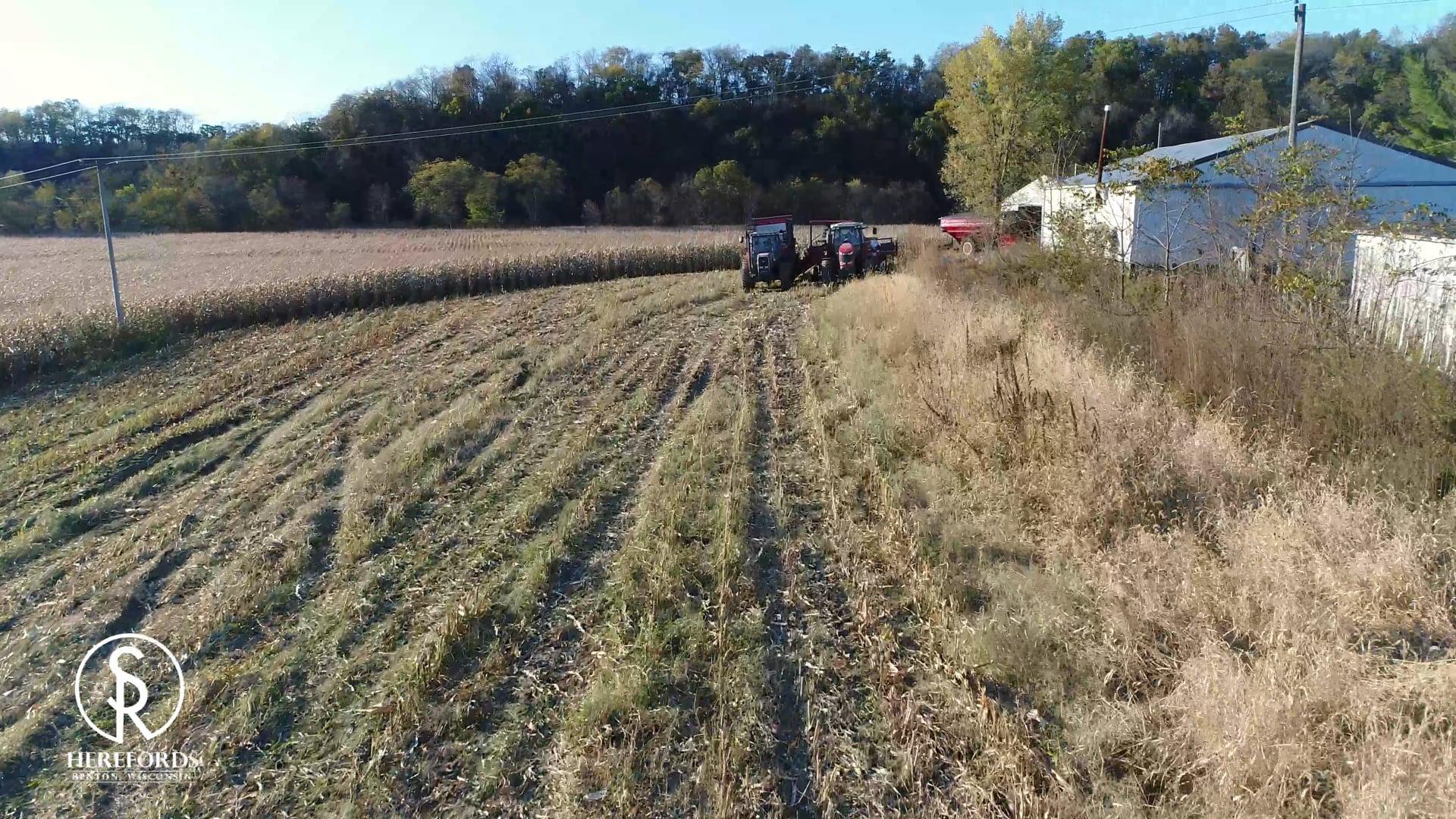 SRR Chopping Corn Silage 2019