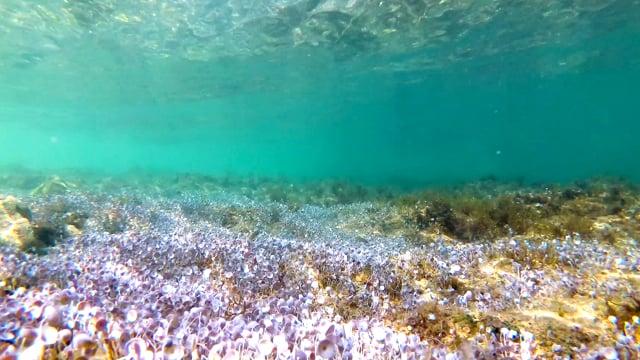 Underwater of the Adriatic Sea