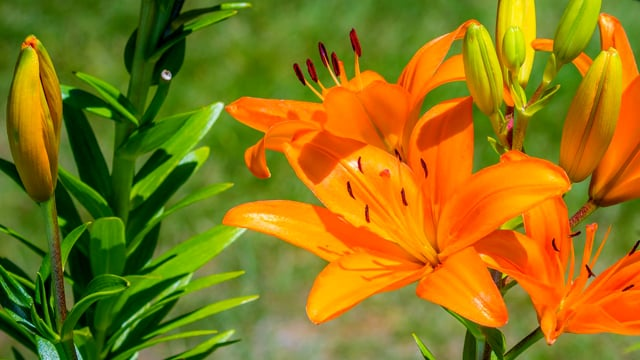 Backyard Flowers - 4K HDR