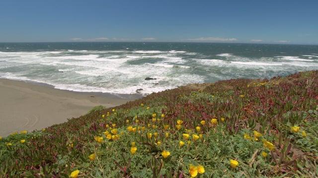 Coastal California Wonders-1