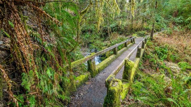 Walking in the Woods 3