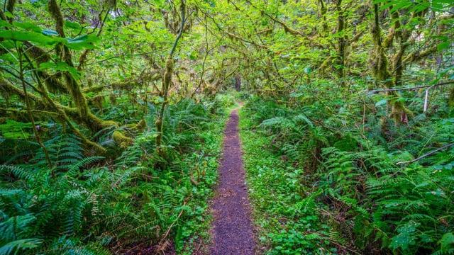 Coal Creek Natural Area, Newcastle, WA - Walking Tour