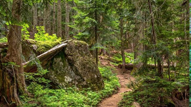 Middle Fork Trail-3, Snoqualmie Region, WA