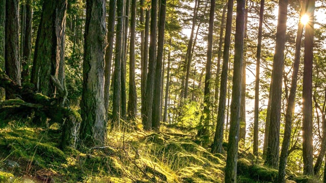 Bear Ridge Trail, Issaquah, WA