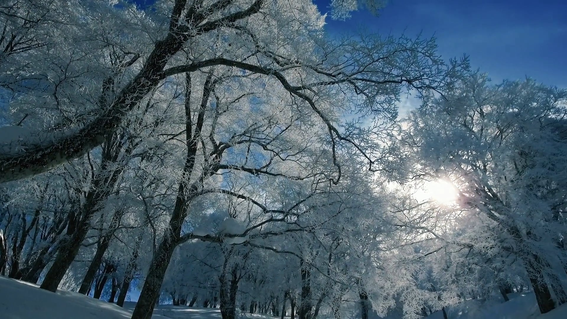 One day in winter...