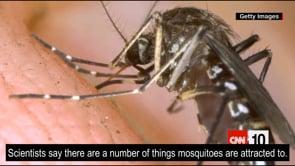 뉴스(모기와 냄새의 관계)