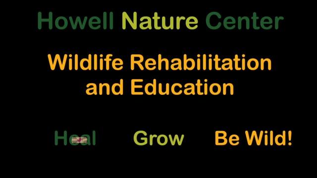 Howell Nature Center Wildlife Program