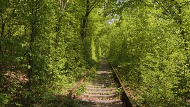 Tunnel of Love. Klevan, Ukraine