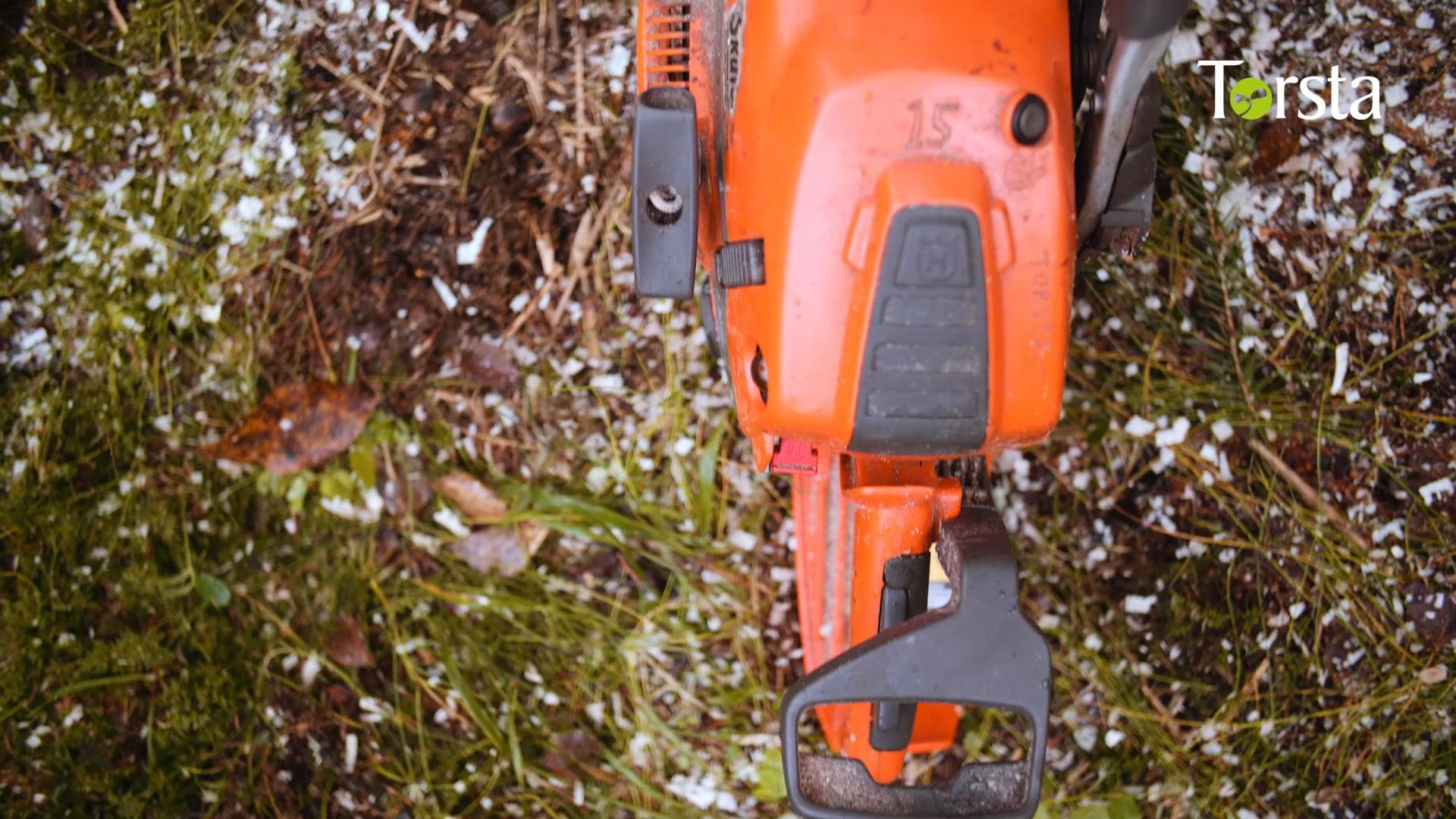 Hur är det att gå skogsinriktning på Torsta?