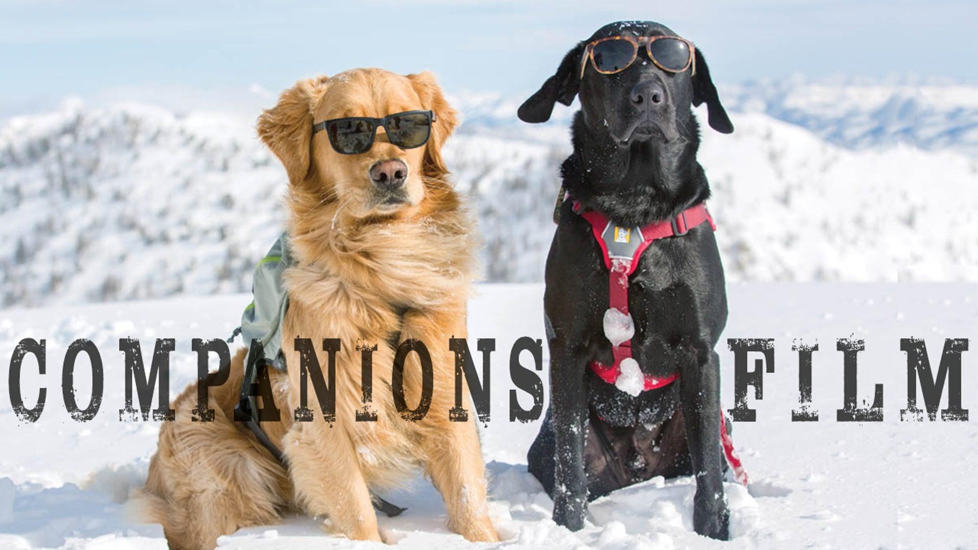 Companions Film: Trailer