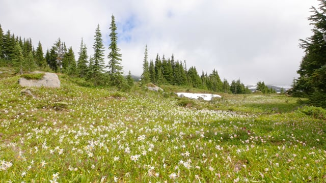 Mountain Wildflowers - Nature Soundscape