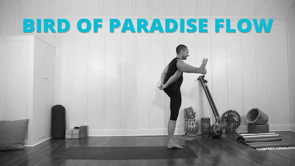 Bird of Paradise Flow