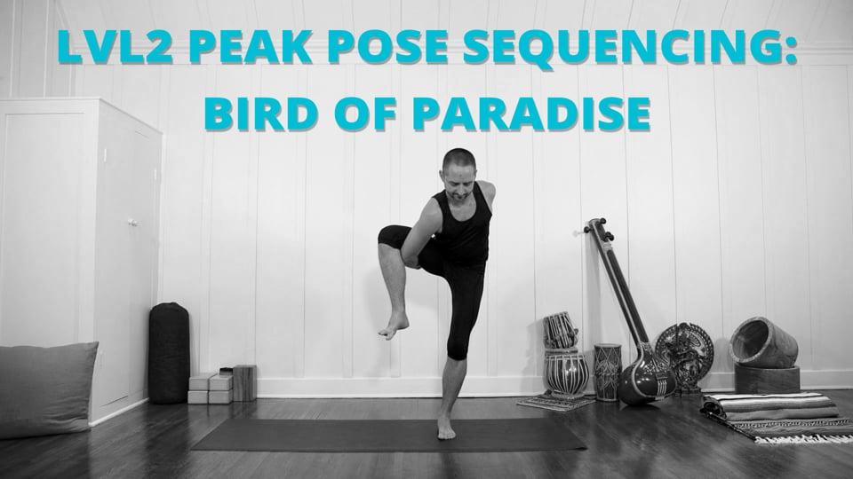 Lvl2 Peak Pose Sequencing: Bird of Paradise