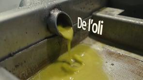 Reportatge de vídeo sobre la oliva arbequina i la Festa de l'oli de Belianes