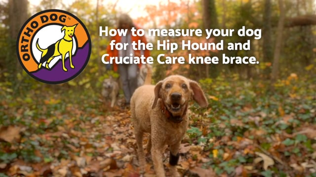 Ortho Dog - How To Measure