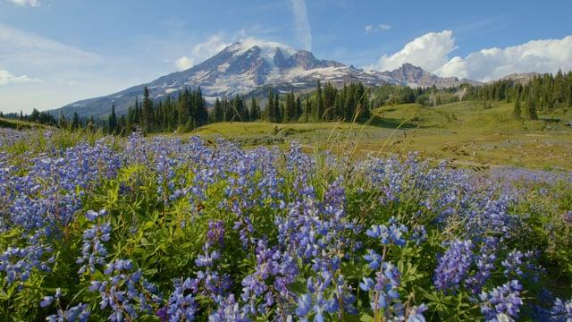 Reflection Lake, Mount Rainier National Park - Short Preview