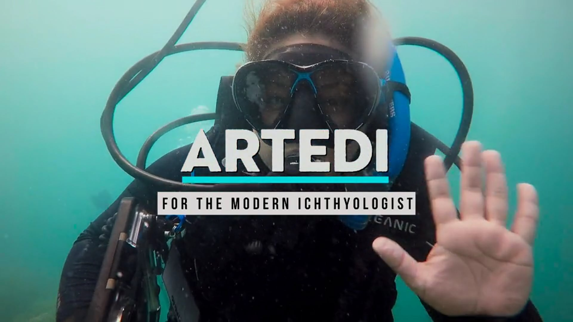 Artedi: An Experiment in Efficacy