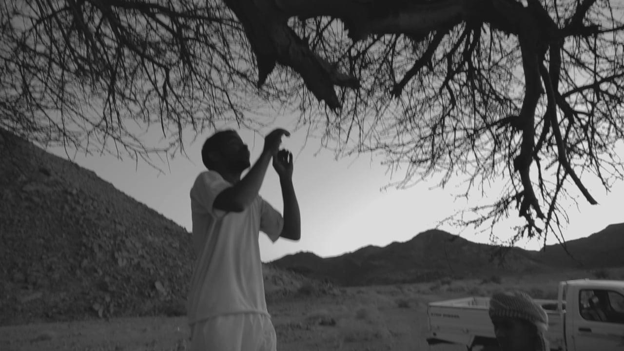 Acacia, a video by Vitor Hugo Costa