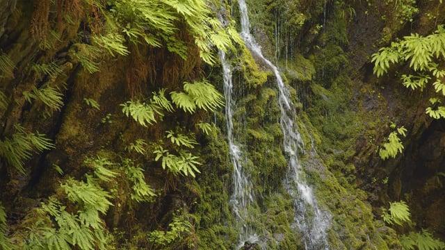 Enchanted Valley Trail, Washington State