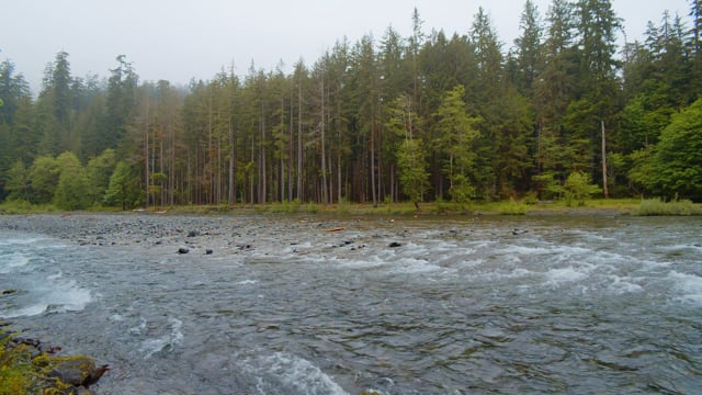 River. Olympic National Park