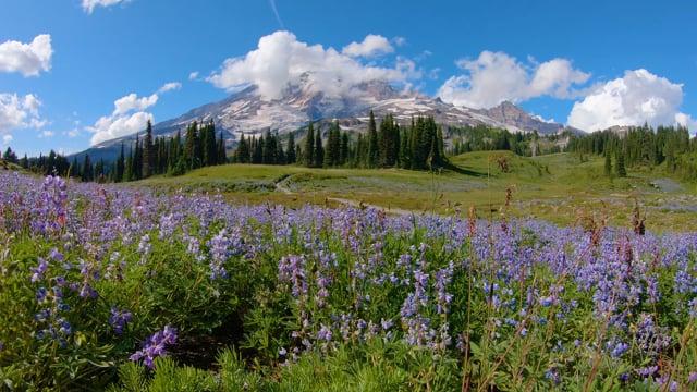 Reflection Lake Trail - Mount Rainier - Nature Soundscape
