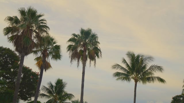 Tropical Morning - Nature Soundscapes