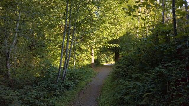 Newcastle Highlands Trail, Washington State - Virtual Hike