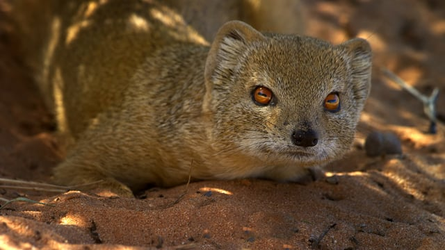 4K African Wildlife - Wild Animals of Africa