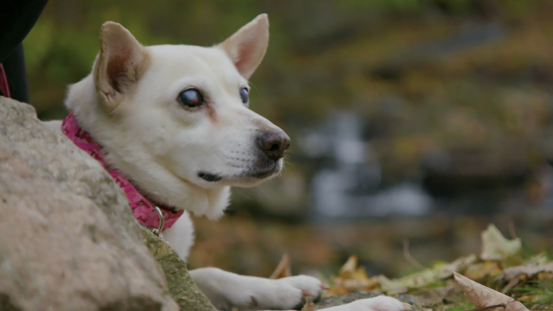 Hill's Pet Food | A Leg Up: Daisy