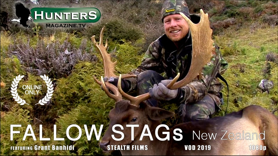 Fallow Stags - New Zealand