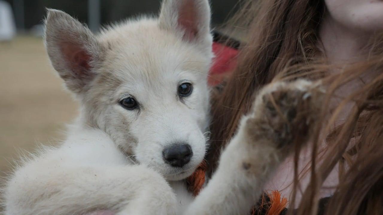 Australia Bushfires: A family & their 14 dogs