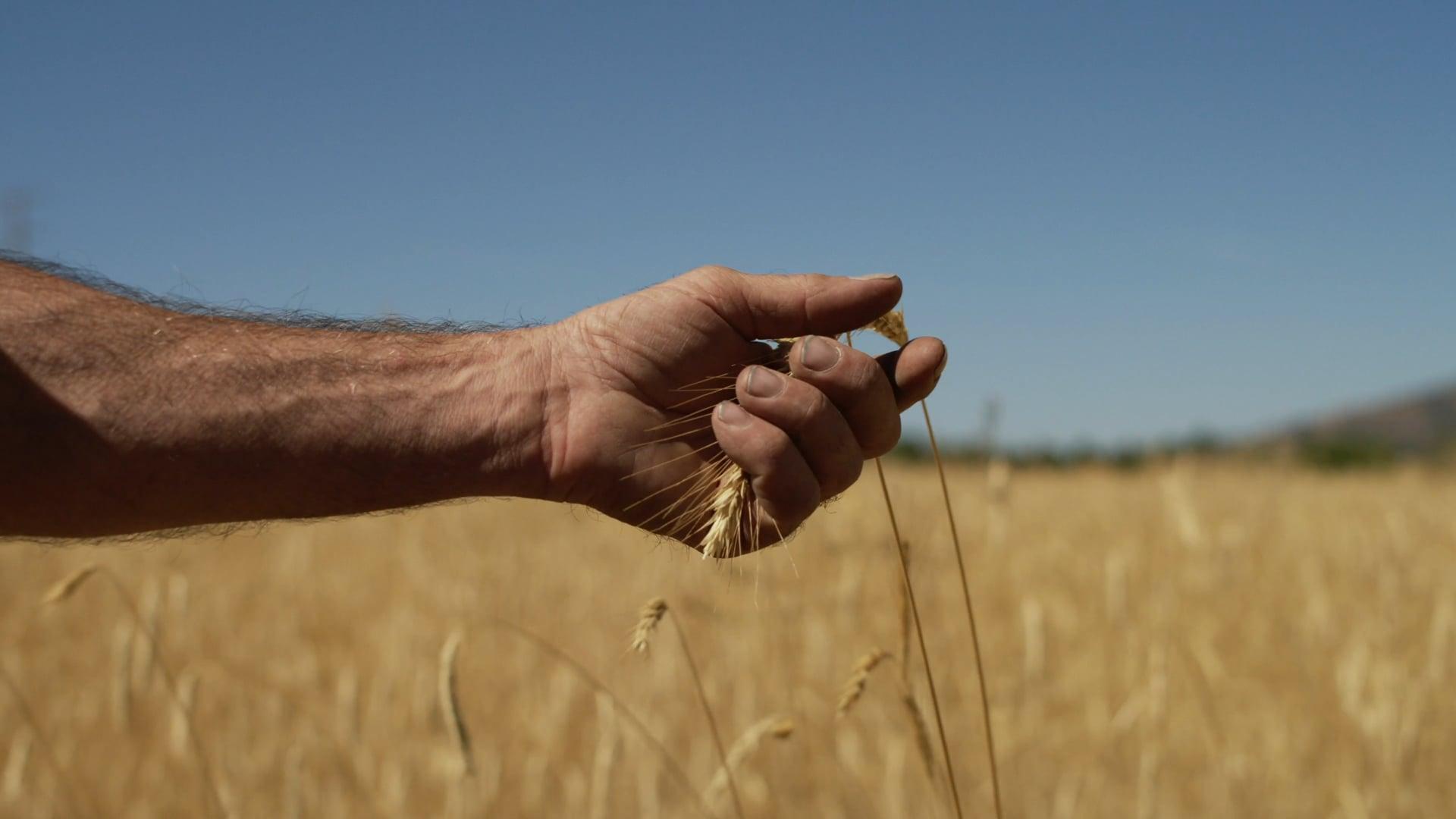 Alex Weiser- Tehachapi Grain Project