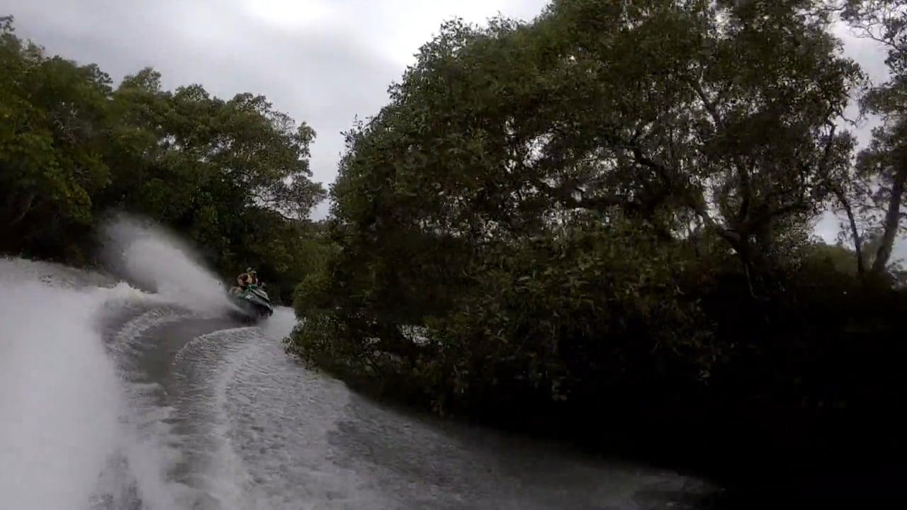 High Tide Mangroves short version