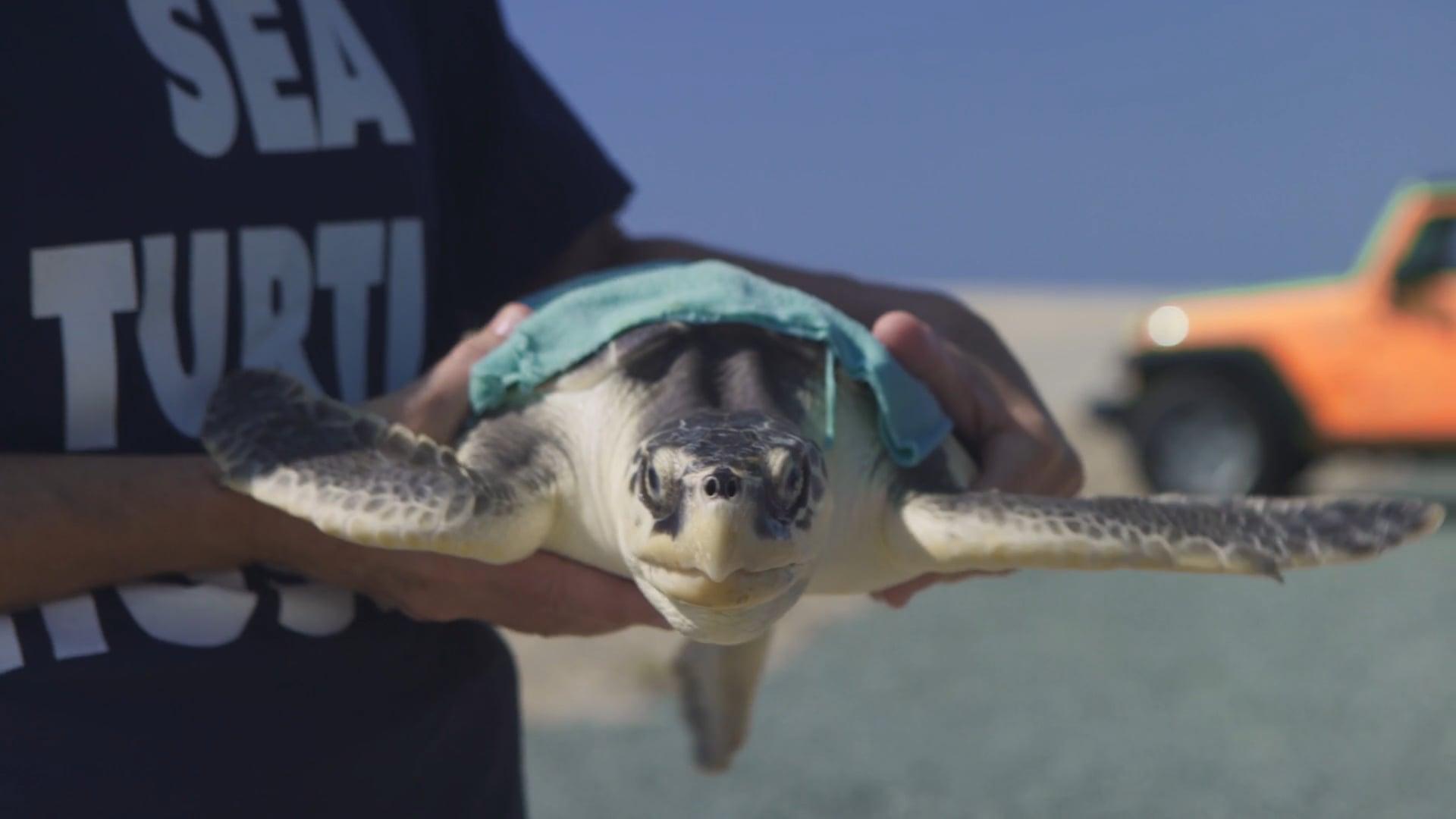 Visit NC - Sea Turtles Release