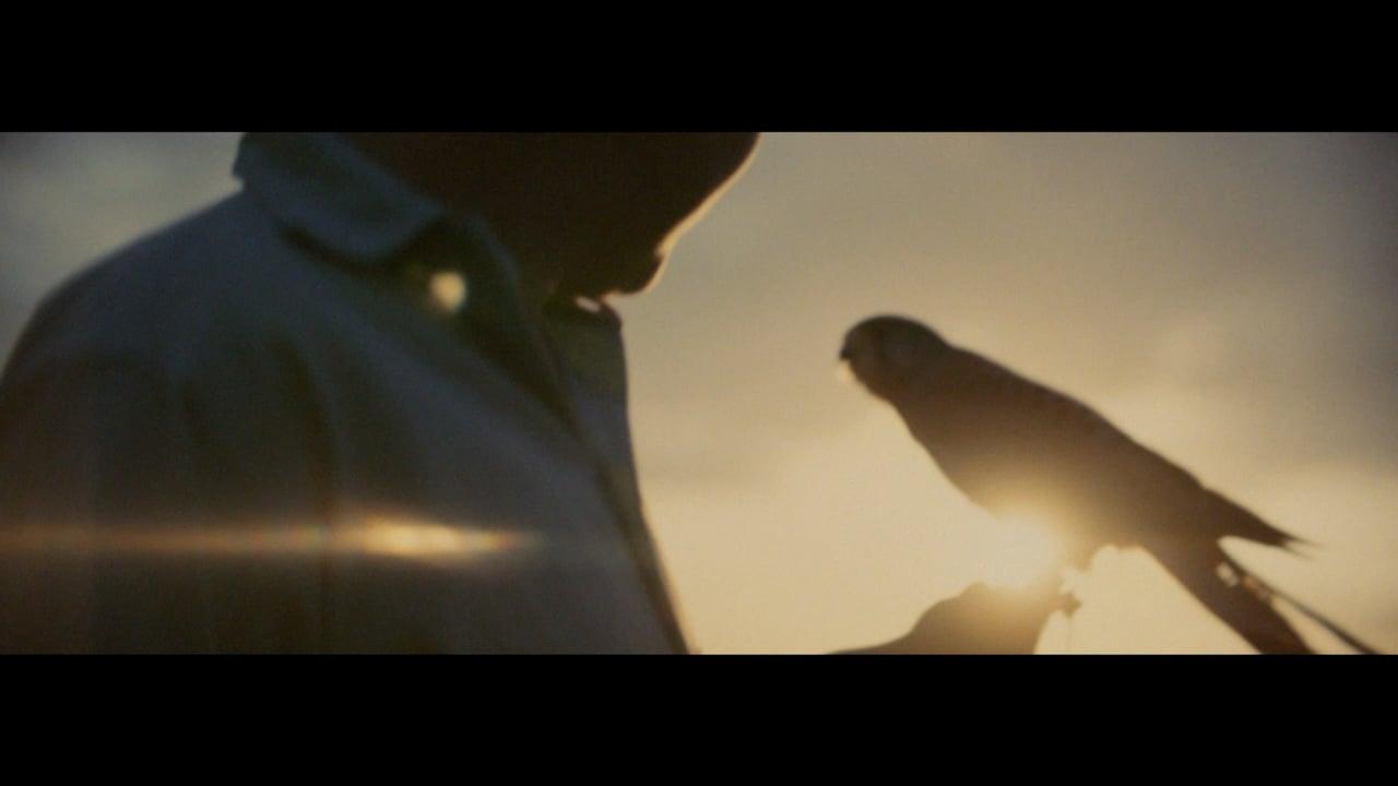 The Birdman | Short Film of the Day