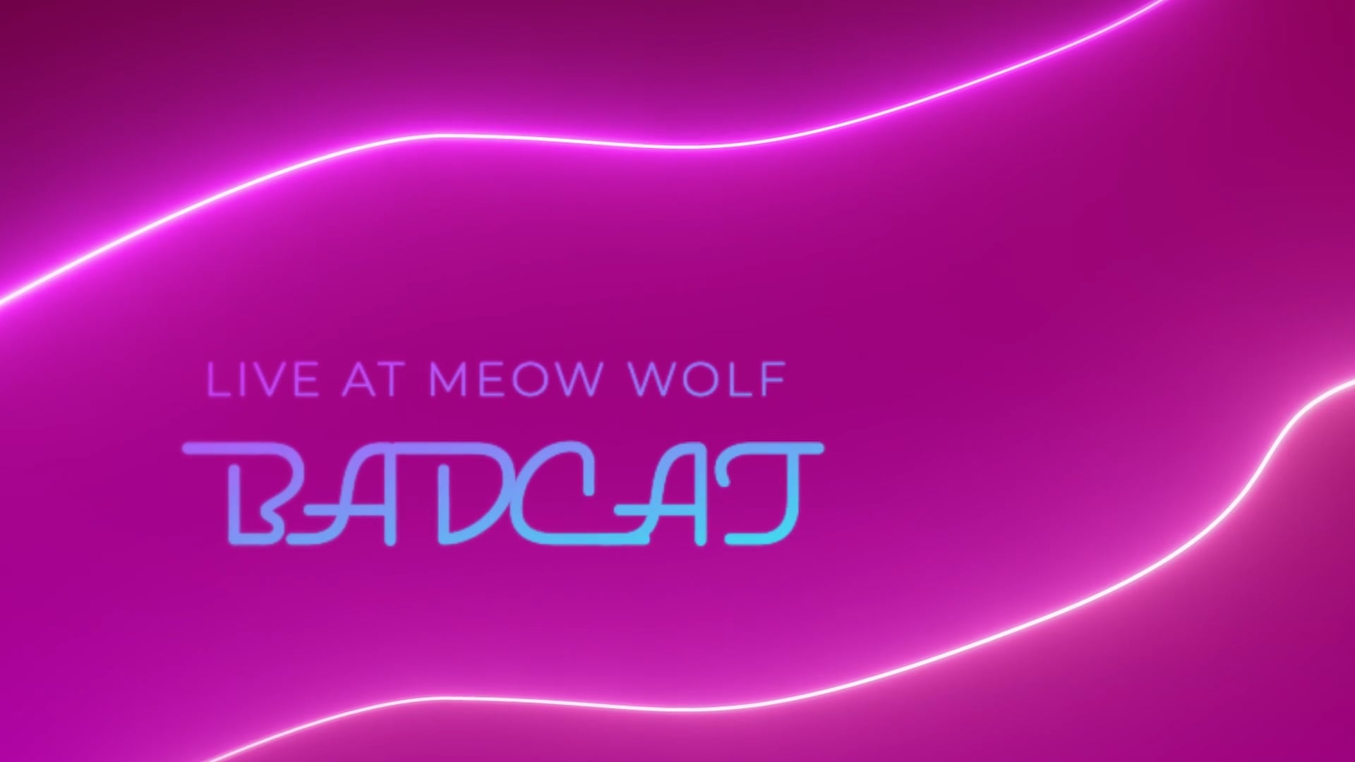 Badcat Live at Meow Wolf