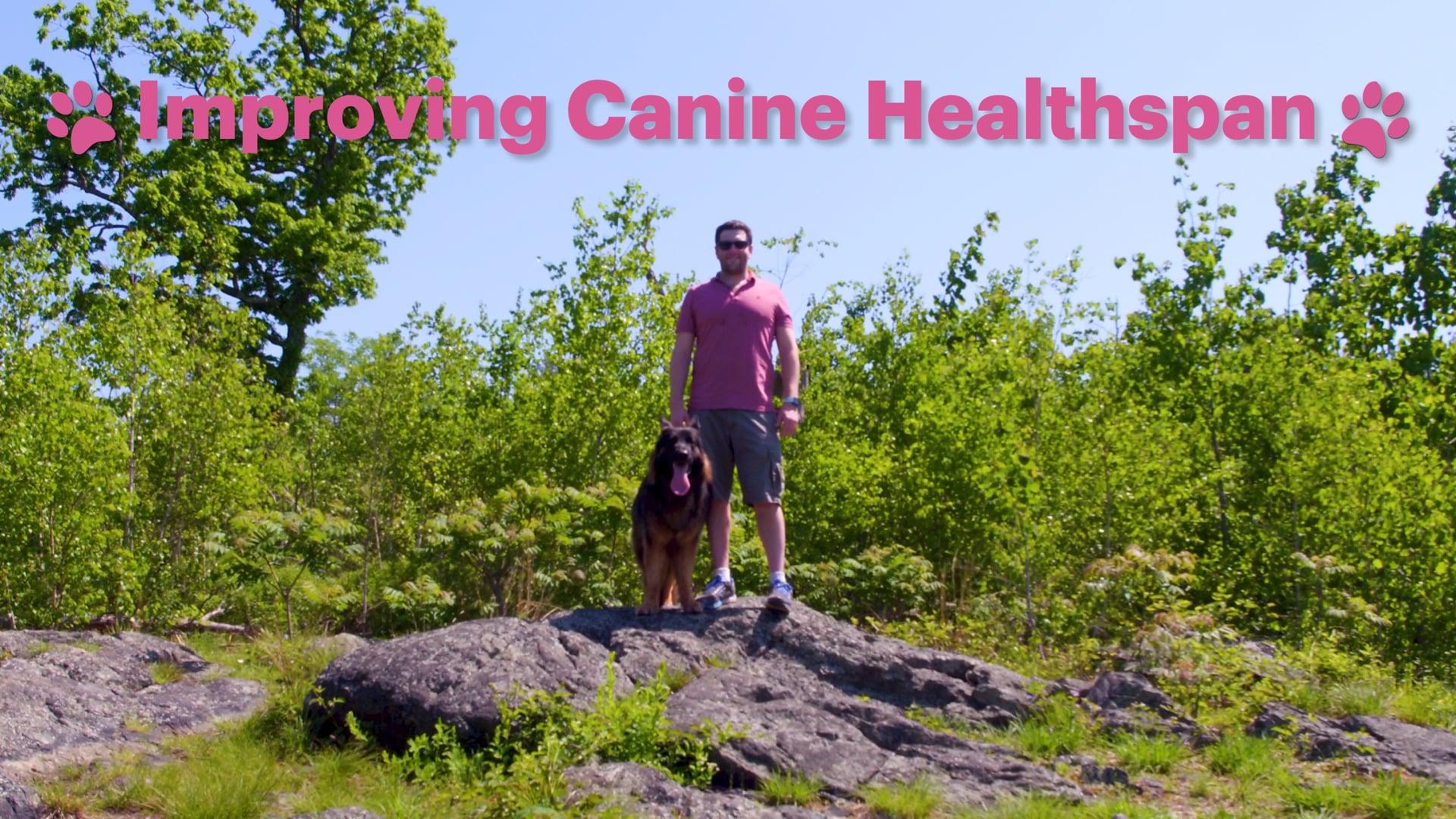 Improving Canine Healthspan