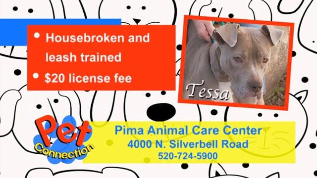 Pet Connection - Tessa