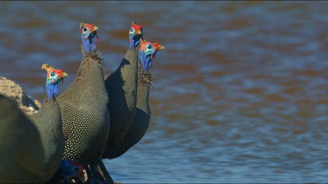 African Wildlife: Amazing Birds